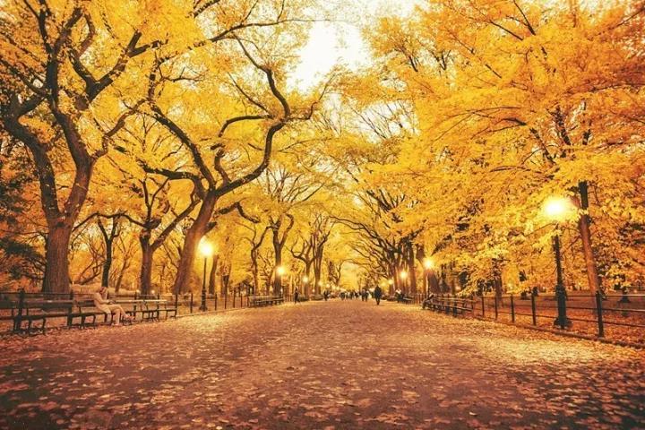 赏秋攻略 微风带凉景如画